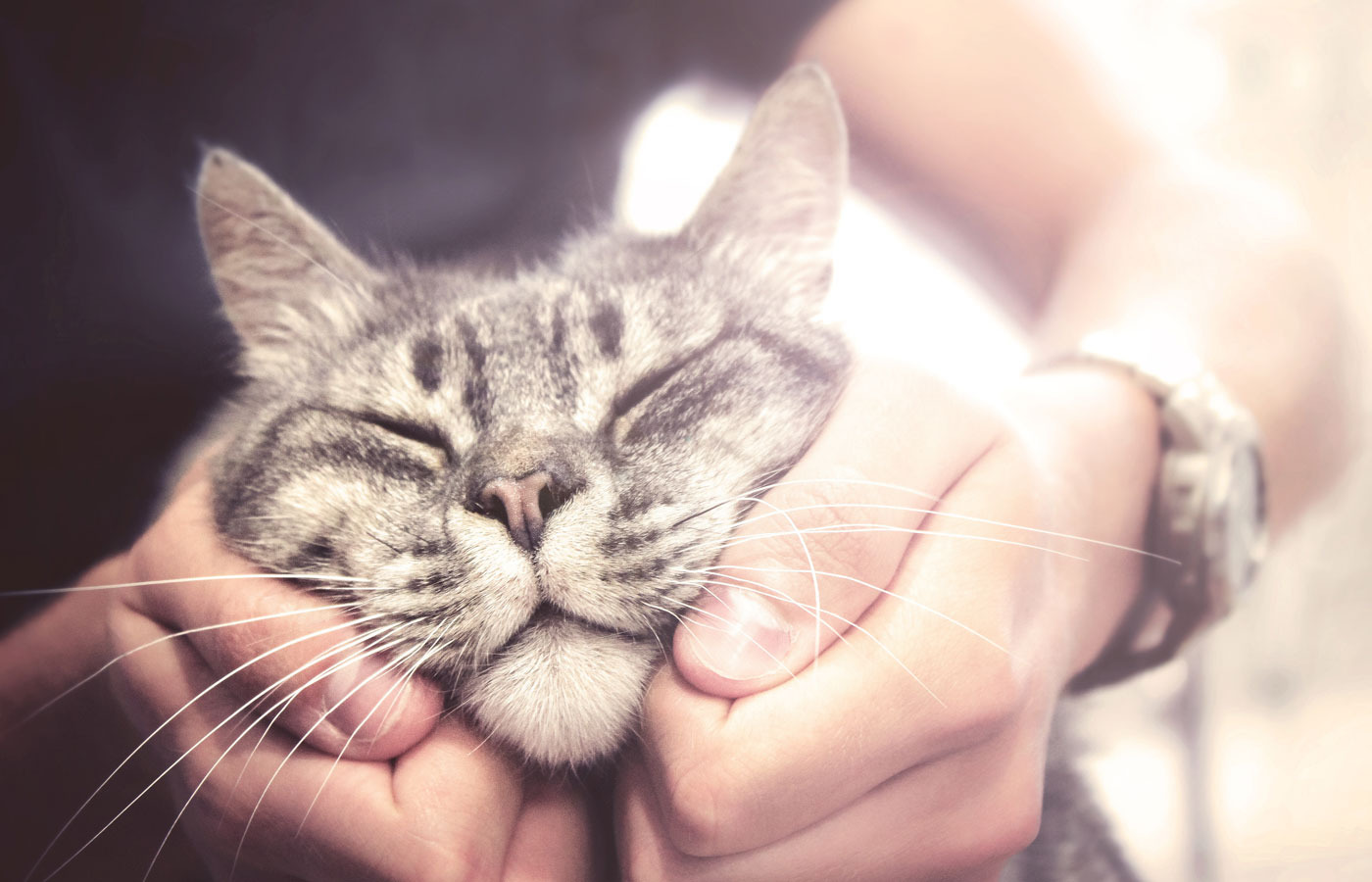 lovely cat in human hands, vintage effect love for the animals